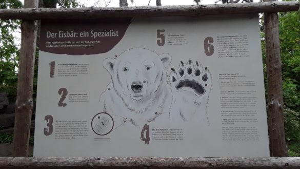 Unser Ausflug zum Tierpark