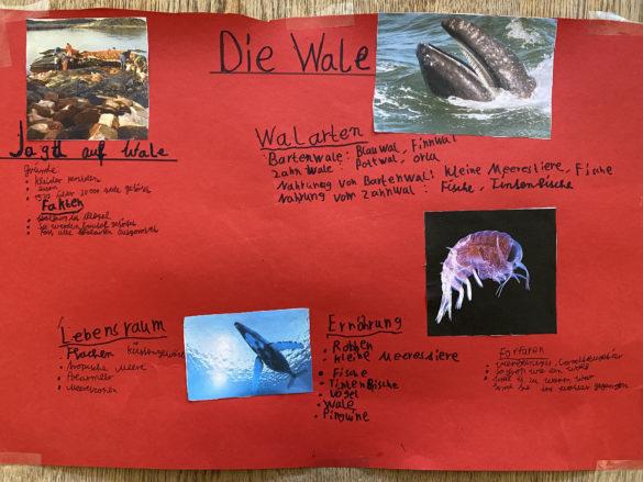 Corona-Geschichten, Gedichte & viele weitere schöne Ideen der Wale-Klasse